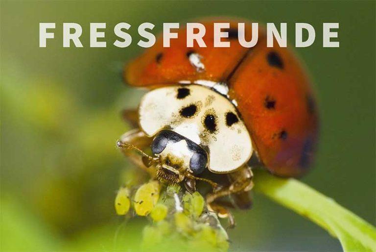 Fressfreunde