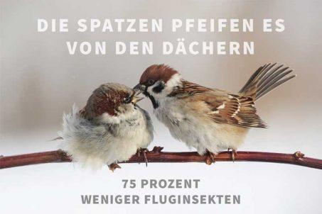 Spatzen